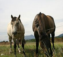 Curious Horses by Alyce Taylor