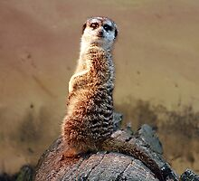Meeting Mr. Meerkat by Adara Rosalie