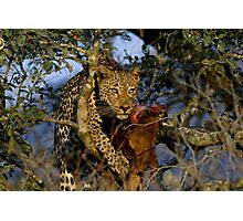 Leopard with prey Photographic Print