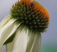 Pollen Galore by Deborah  Benoit