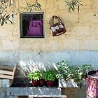 Pachino Tomato Growers Front Yard by rorycobbe