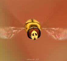 Hoverfly by Ian Chapman