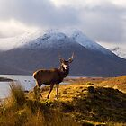 Wild Scotland by Duncan Shaw