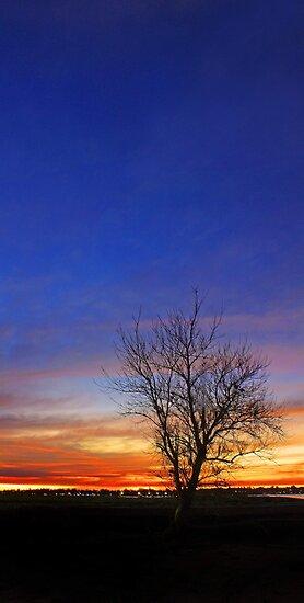 Tree At Dusk  by EOS20