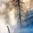 Fountain Paintpots, Yellowstone National Park, USA. by photosecosse /barbara jones
