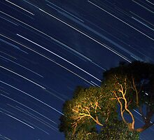 Star Trails from Home by Sheldon Pettit
