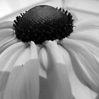 Flowers in black and white 09 by katpix