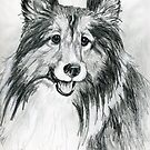 "Shetland Sheepdog ""Sheltie"" by Linda Costello Hinchey"