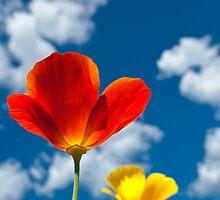 Poppy and sky by Veikko  Suikkanen