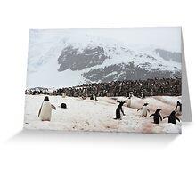 "Gentoo Penguins ~ ""Penguinville, Curville Island, Antarctica"" Greeting Card"