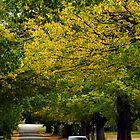 Bright during autumn by Darren Stones