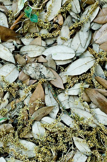 Carpet by Ilva Beretta