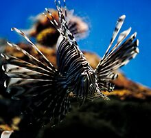 lion(fish) by brokedownmelodies