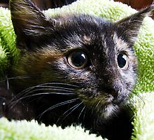Stray Kitten by angelandspot