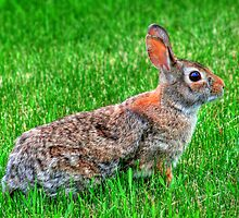 """""""Ready for the Bunny Hop"""" by Larry Trupp"""