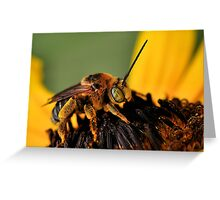 Long-Horned Bee Greeting Card