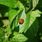 Little Miss Lady Bug by Gwyn Lockett