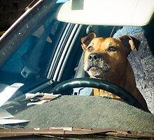 Dog Driving School by Marnie Hibbert