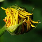 Like snap-beans (from wild flowers collection) by Antanas