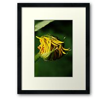 Like snap-beans (from wild flowers collection) Framed Print