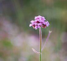 Streaming Lavender: by Cherubtree
