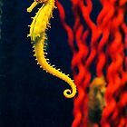 Seahorse Side View by Rochelle Boardman