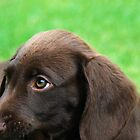 puppy eyes by dinghysailor1