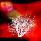 Red Tree by Lynne Haselden