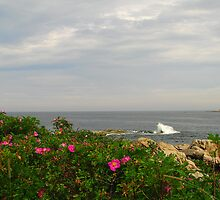 Rosehips overlooking the sea by Patty Gross