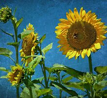 Giant Sunflowers by Bonnie T.  Barry