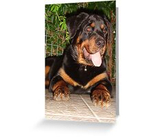 Rottweiler Paws Greeting Card