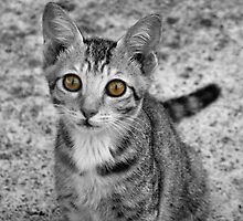 A cute Yellow Eyed Kitten Print by exaltedshrimp