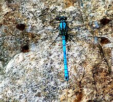 Whitewater rockmaster dragonfly by iandsmith