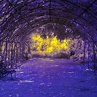 Tunnel by Andrew Dickman