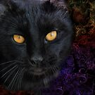 Black Cat by Barbara Manis