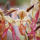 Lady slipper orchid by LeGreg