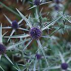 Purple Star Plant by Gwyn Lockett