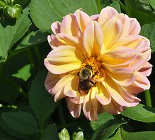 Bumble Bee in Flower by mltrue