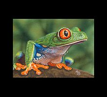 Red-Eyed Tree Frog #5 by artbyakiko