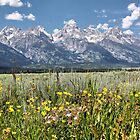 Grand Tetons by Teresa Zieba