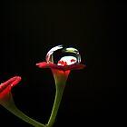 Droplet by Lawrence Crisostomo