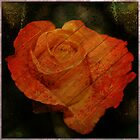 Textured Rose  by Cody  VanDyke