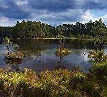 Loch an Eilean, in Rothiemurchus Forest by David Lewins