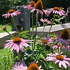 Purple Coneflowers by Deborah Austin