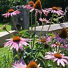 Purple Coneflowers by Deborah Austin