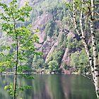Chapel Pond Birches by Deborah Austin