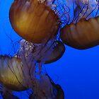 Orange JellyFish by Linda Scott