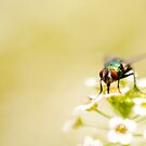 mystery in my garden #10 (actually it&#x27;s just a fly.. :p) by JendrikW