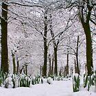 Spring vs Snow by Littlest