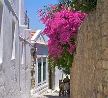 Fuscia flowers in Rhodes by Littlest